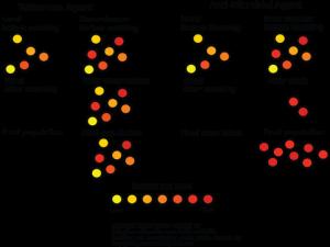 A visual representation of the waterless vs anti-microbial evolutionary niche.